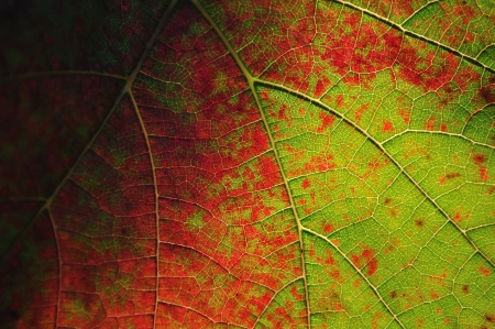 Detail view of colorful vine leaf Stock Photo - 19057328