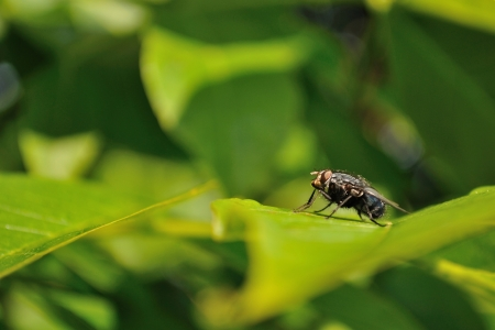 Detail view of house fly sitting on green leaf Stock Photo