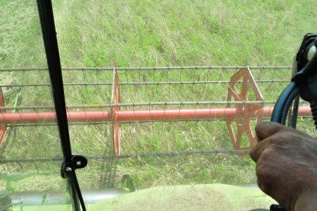 Man driving the combine harvester in the wheat field during harvesting