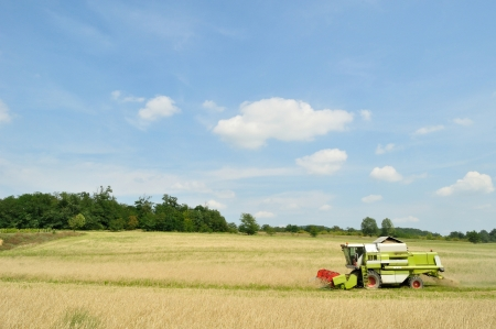 Modern combine harvester in the wheat field during harvesting photo