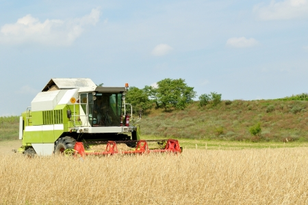 Modern combine harvester in the wheat field during harvesting