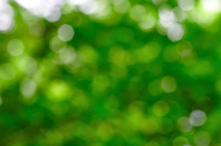 Abstract natural green blurred backgroun Stock Photo - 20687790