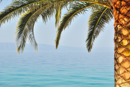Palm tree on right side of frame with sea on background  Podgora, Croatia Stock Photo