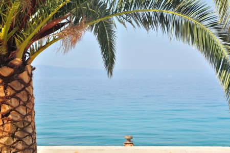 Palm tree on left side of image with sea on background  Podgora, Croatia
