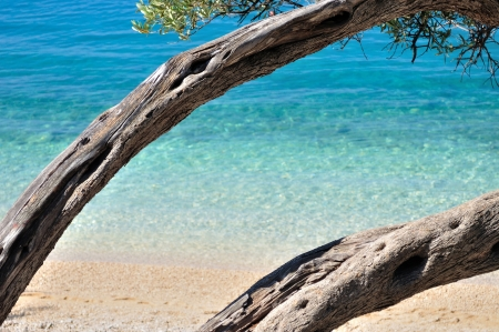 Amazing tropical beach with turquoise water and framed by tree  Natural background  photo