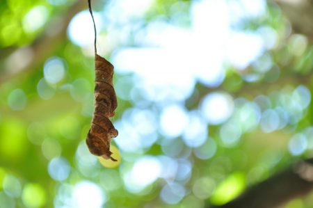 Autumn leaf hanging from tree with blurred natural background Stock Photo