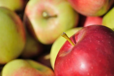 Pile of red, green, yellow ripe apples  Focused on one red apple in right bottom corner