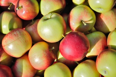 Texture of pile of red, green, yellow ripe apples