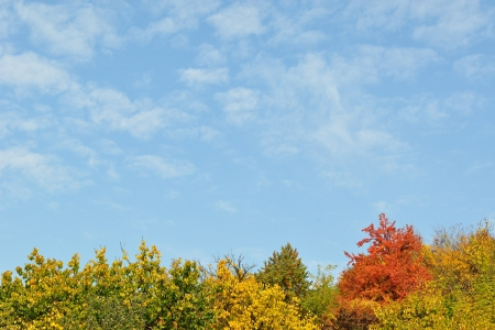 Colorful autumn trees and blue sky photo
