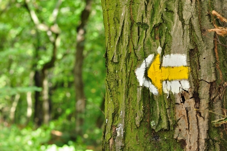 Yellow and white hiking trail signs symbols in spring on tree