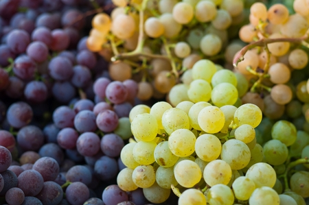 Red and green vine grapes for background Stock Photo