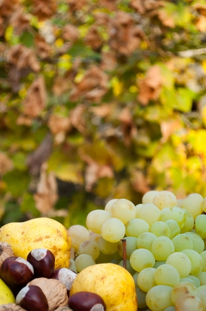 Detail of decorative composed colorful autumn fruits and vegetables with blurred background. Vertical photo