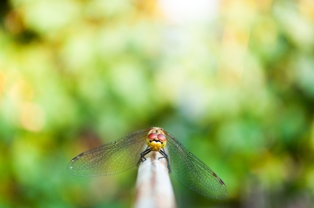 Dragonfly looking into camera with green blurred background. Space in top side