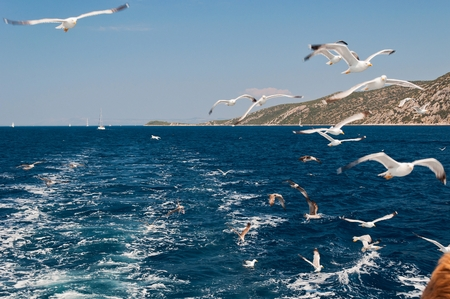 Flock of seagulls flying over sea behind the ship Stock Photo