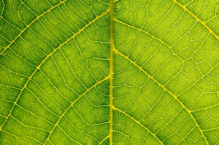 Detail view of green leaf texture. Natural background