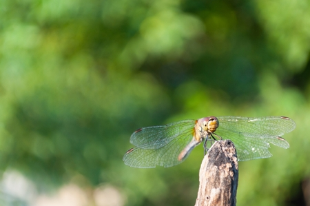 Dragonfly with green blurred background. Space in left and top side Stock Photo