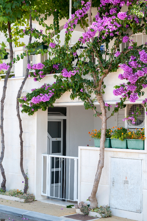 White building with beautiful Bougainvillea flowers at the entrance in Croatia