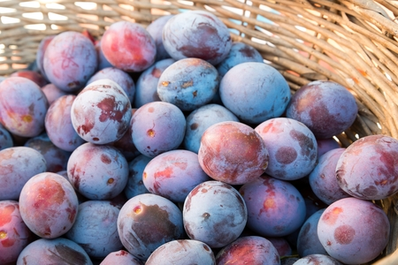 Fresh ripe plums texture, background in a basket