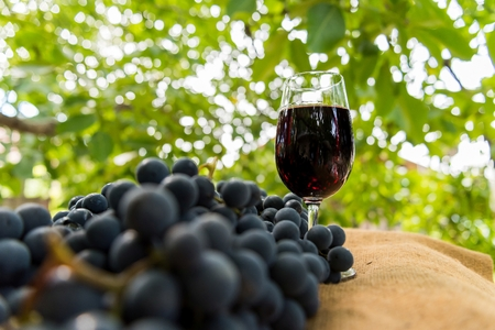 Red wine glass and bunch of grapes outdoor against blurred green natural background. Space in left side.