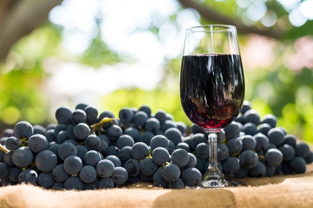 Red wine glass and bunch of grapes outdoor against blurred natural background. Space in left side.