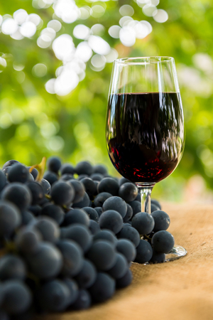 Red wine glass and bunch of grapes outdoor against blurred green natural background. Vertical photo. Space in left side.