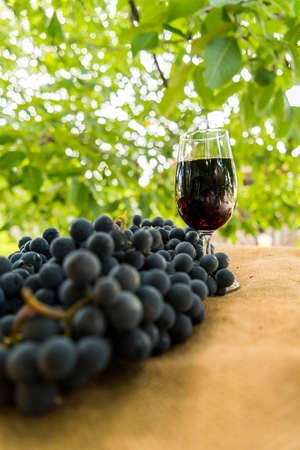 Red wine glass and bunch of grapes outdoor against blurred green natural background. Vertical photo. Space in top side.