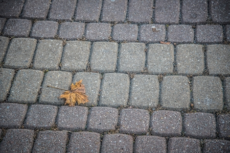 Fallen yellow maple leaf on the cobblestone pavement in autumn. Space in right side