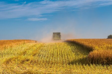 Back view of modern combine harvester in the wheat field during harvesting. Agriculture and Farming Collection Stock Photo