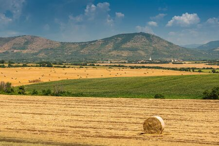 Hay and round straw bales on the wheat field after harvest. Italy
