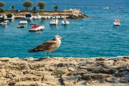 One seagull on the fortress in the town Krk in Kvarner riviera in Croatia. Blue sea with ships in background.