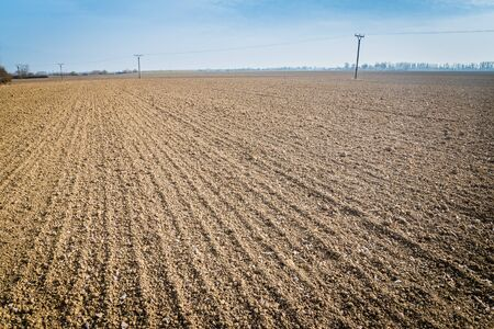 Parallel lines of a plowed and sown field under blue sky in the autumn. Agricultural concept