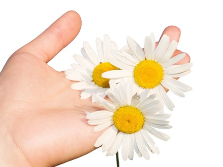 Womans hand with flowers isolated on white Stock Photo