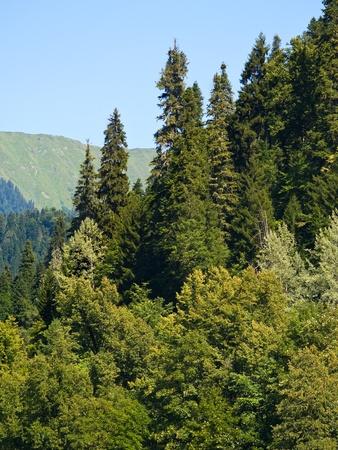 Subtropical mountain plants on summer