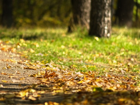 Autumn path in park with fallen leaves