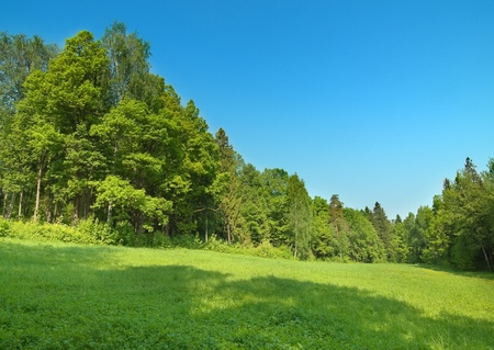 Green forest on bright sunny day with clear blue sky photo
