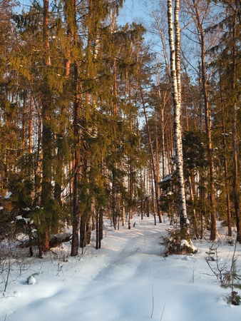Winter forest on sunset with blue sky Stock Photo