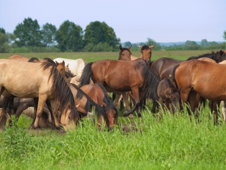 Group of  horses with young colts on green countryside meadow