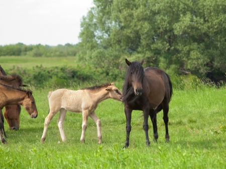Dark horse with young colt on countryside meadow Stock Photo
