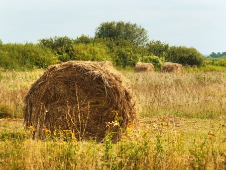 Harvested summer field with rolls of straw Stock Photo