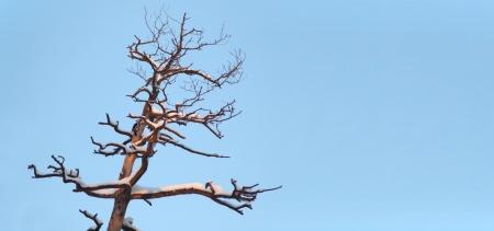 Old tree on blue sky background  Stock Photo