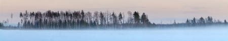 Winter forest panorama with many snow and colorful sky