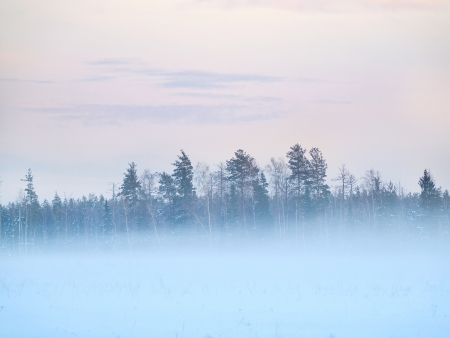 Winter field with trees, fog and colorful evening sky