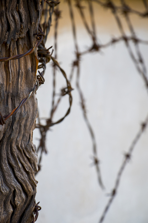 trespass: Closeup of barbed wire with wooden beam in Vietnam war prison.