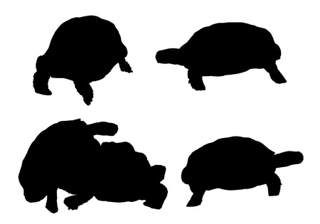 creep: Vector turtles in different positions on white background.