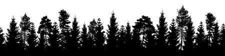 Seamless forest vector landscape with coniferous trees in black and white. Vetores