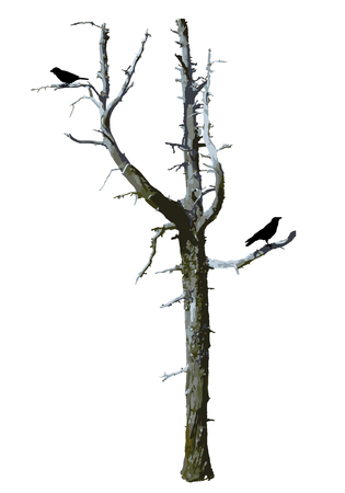 Realistic scary tree vector with birds.