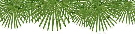 Vector seamless summer petticoat palm leaves on white background. 向量圖像