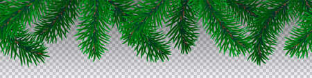 Beautiful seamless coniferous tree branches on transparent