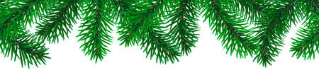 Beautiful seamless coniferous tree branches on white background vector. Illustration