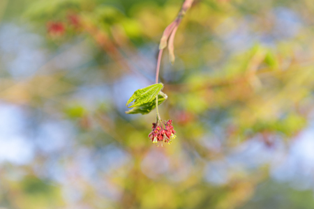 One twig with spring blossom on a soft blur background